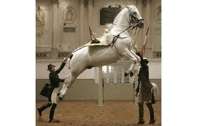 Vienna's Lipizzaner mares and foals on show