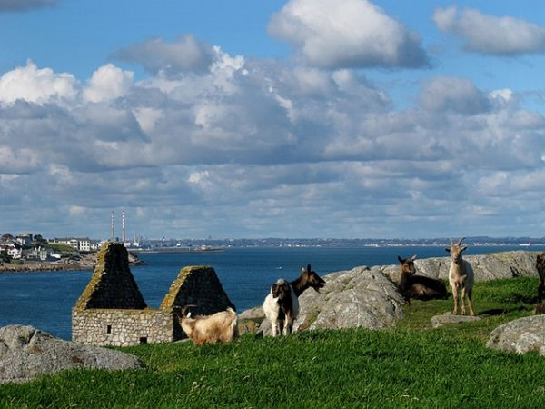 New bylaws sought for Dalkey Island