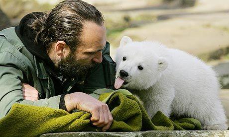 Berlin wins rights to Knut the Polar Bear