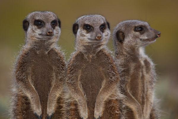 Eye Contact: Portraits of African wildlife
