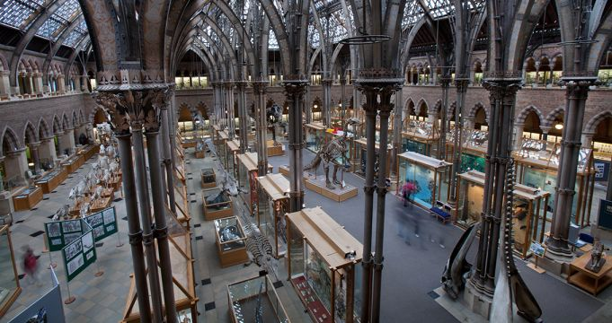 Sunlight damages artefacts at Oxford's Natural History Museum