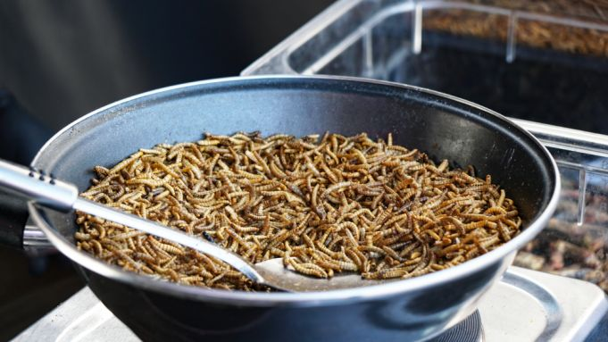 EU approves mealworms for human consumption