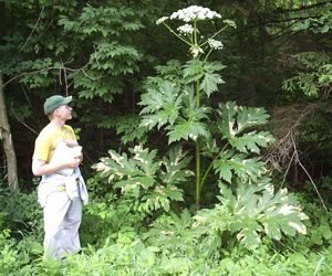 Brussels fights invasive plants - image 4