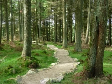 Free guided walks in the Dublin Mountains - image 3