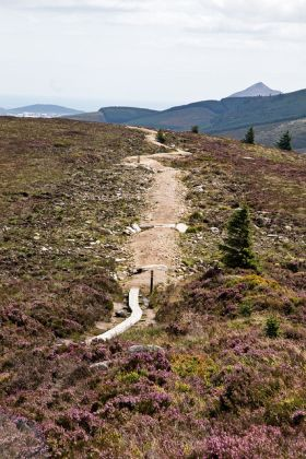 Free guided walks in the Dublin Mountains - image 2