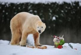 Berlin wins rights to Knut the Polar Bear - image 2