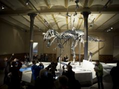 Berlin displays Europe's first T-Rex skeleton