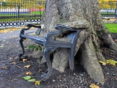 Dublin seeks to protect Hungry Tree