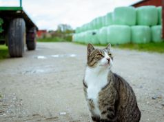 Not just minks, Denmark also kills covid- positive cats in fur farms