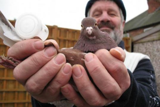 Pigeon Whistles: An Orchestra in Flight