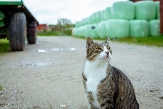 Not just minks, Denmark also kills covid- positive cats in fur farms