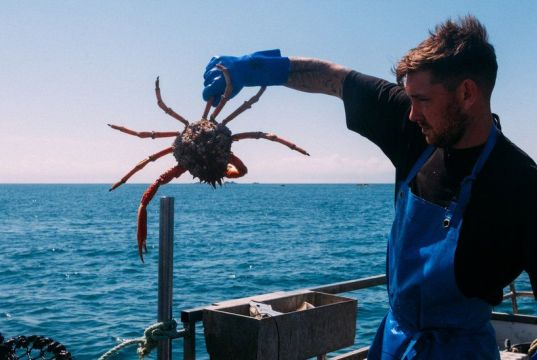 Cornish fishers to rename 'under-loved' species to attract British buyers