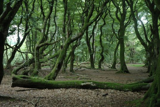 All you need to know about the forest of Rold Skov