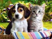Wie Sie Ihren Hund trotz Hundeallergie behalten können...