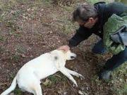Stray pets get reprieve in Denmark