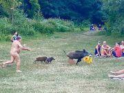 German nudist chases laptop-stealing wild boar