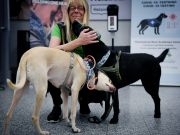 At Helsinki Airport dogs are used to detect covid-19