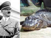 Saturn, Hitler's alleged alligator, embalmed in Moscow
